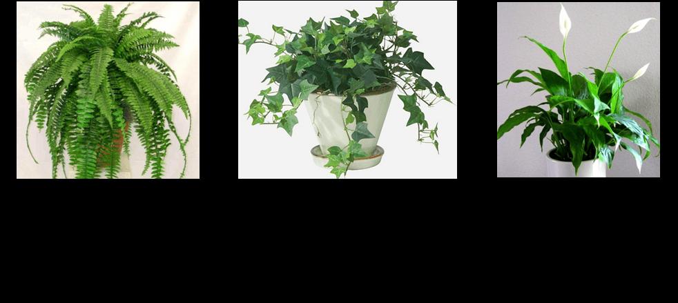 נוסחה לצמחים מטהרים בחדר